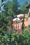 Bild auf U1neu